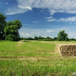 Meadows near Morava River - Rudo Jureček