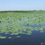 Danube Delta / delta Dunaja