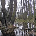 Ramsar site Šúr / Šúr